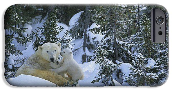 Born Adult iPhone Cases - Polar Bear And Cubs iPhone Case by Jean-Louis Klein & Marie-Luce Hubert