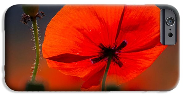 Close Up Pyrography iPhone Cases - Red Poppy iPhone Case by Peteris Vaivars