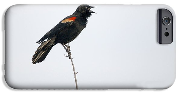 Flight iPhone Cases - Red-winged Blackbird Portrait iPhone Case by Roy Williams