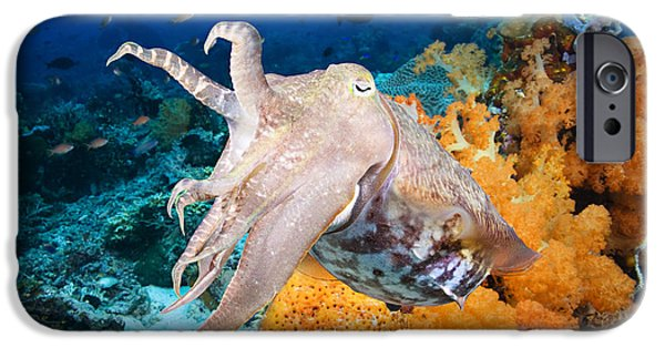 Jet-propelled iPhone Cases - Reef squid iPhone Case by Dave Fleetham - Printscapes