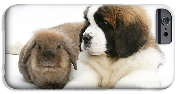 Domesticated Animals iPhone Cases - Saint Bernard Puppy With Rabbit iPhone Case by Mark Taylor