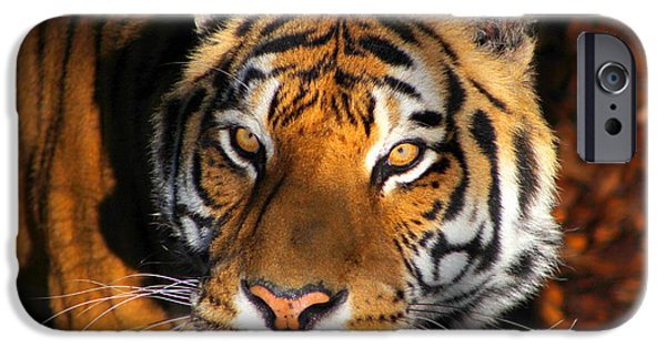 Wild Animals iPhone Cases - Soulful Eyes iPhone Case by Fiona Kennard