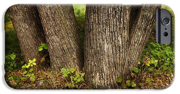 Forest Detail iPhone Cases - Tree Trunks iPhone Case by Donald  Erickson