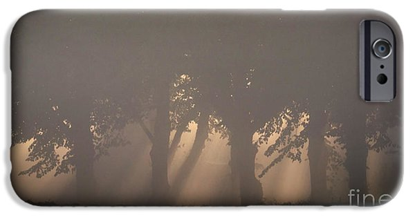 Mist iPhone Cases - Trees in morning light iPhone Case by Allan Wallberg
