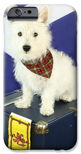 Cute Puppy iPhone Cases - Westie iPhone Case by Amanda Stadther