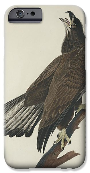 Drawing Of Eagle iPhone Cases - White Headed Eagle iPhone Case by John James Audubon
