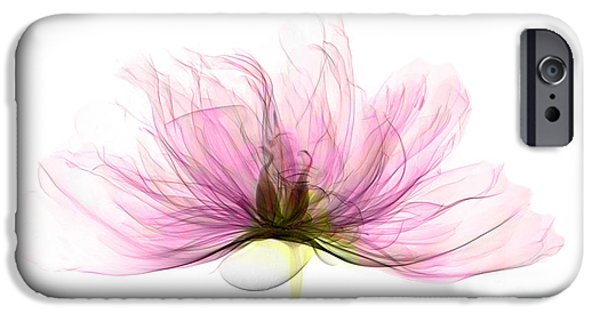 Science Collection - iPhone Cases - X-ray Of Peony Flower iPhone Case by Ted Kinsman