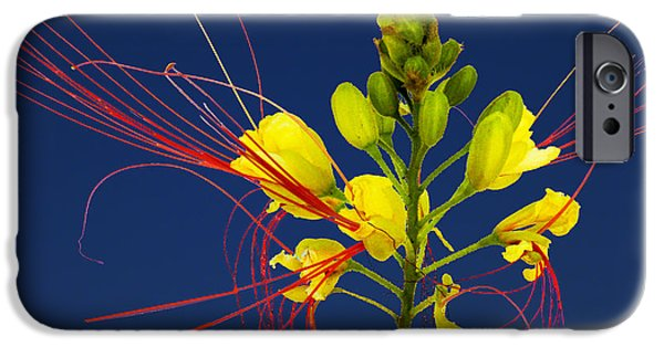 Flora iPhone Cases - 3956 iPhone Case by Peter Holme III
