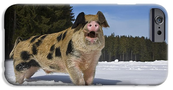 French Open iPhone Cases - Boar In The Snow iPhone Case by Jean-Louis Klein & Marie-Luce Hubert
