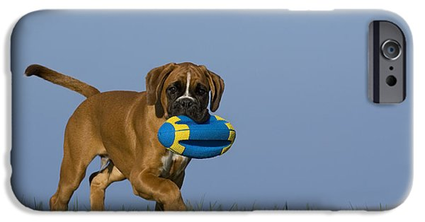 Boxer iPhone Cases - Boxer Puppy iPhone Case by Jean-Louis Klein & Marie-Luce Hubert