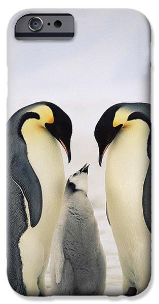 Baby Bird iPhone Cases - Emperor Penguin Aptenodytes Forsteri iPhone Case by Konrad Wothe