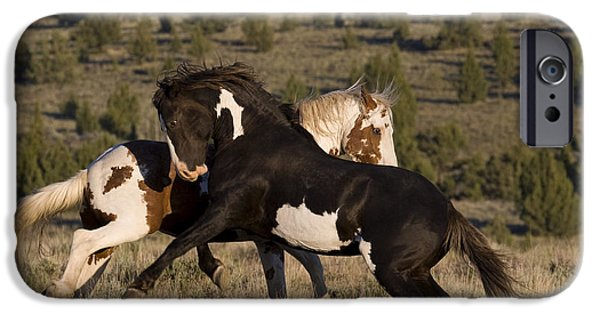 Overo iPhone Cases - Fighting Stallions iPhone Case by Jean-Louis Klein & Marie-Luce Hubert