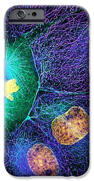 Mitosis iPhone Case by Dr Torsten Wittmann