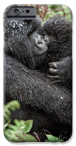 Parental Care iPhone Cases - Mountain Gorilla And Infant iPhone Case by Tony Camacho