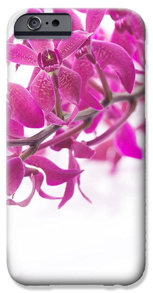 Selective Focus iPhone Cases - Purple Orchid Bunch iPhone Case by Atiketta Sangasaeng