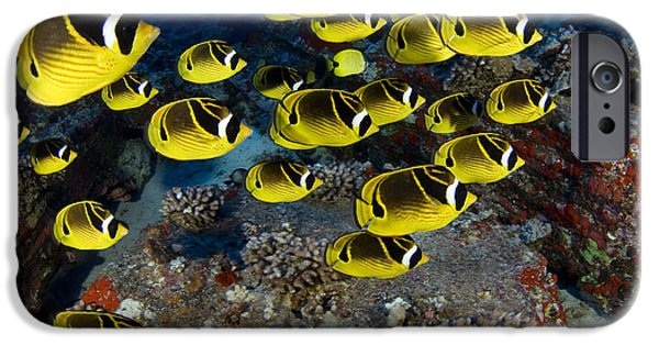 Dave iPhone Cases - Racoon Butterflyfish iPhone Case by Dave Fleetham - Printscapes
