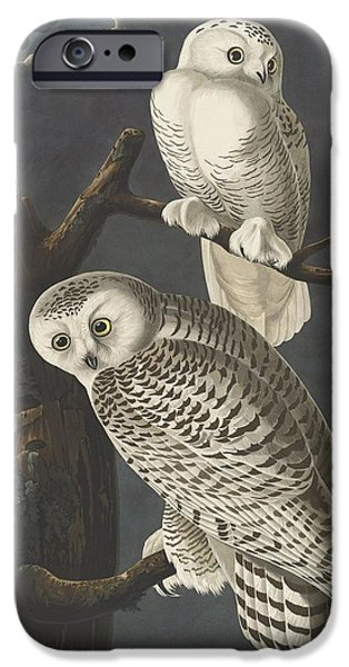Snowy Drawings iPhone Cases - Snowy Owl iPhone Case by John James Audubon