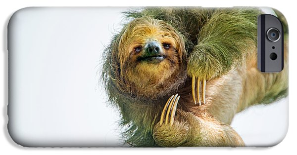 Sloth iPhone Cases - Three-toed Sloth Bradypus Tridactylus iPhone Case by Panoramic Images