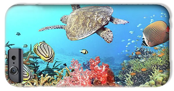 Marine iPhone Cases - Underwater panorama iPhone Case by MotHaiBaPhoto Prints
