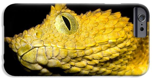 Serpent iPhone Cases - Usambara Eyelash Bush Viper iPhone Case by Dante Fenolio