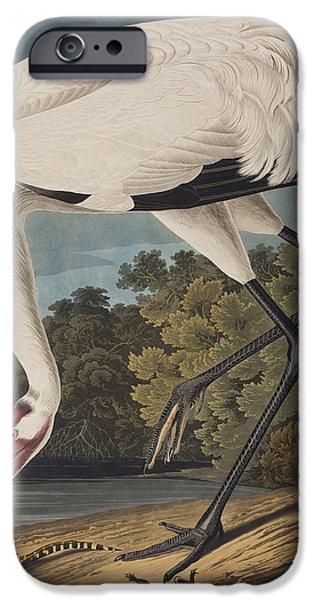 Stork iPhone Cases - Whooping Crane iPhone Case by John James Audubon