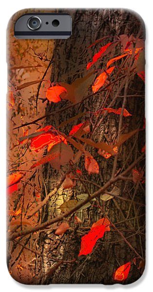 Fall iPhone Cases - 4019 iPhone Case by Peter Holme III