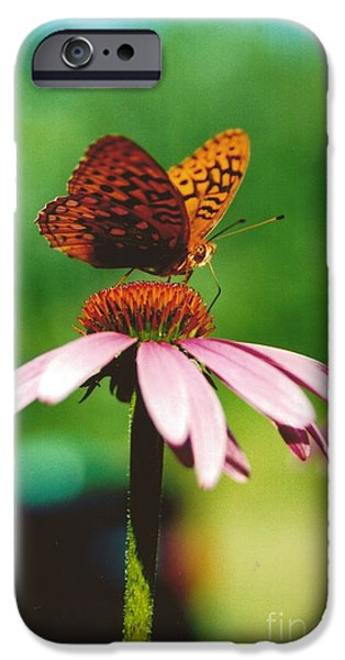 Thinking iPhone Cases - #416 14a Butterfly Cone Flower Lunch Break Good Till The Last Drop iPhone Case by Robin Lee Mccarthy Photography