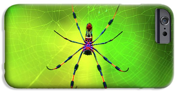 Spider iPhone Cases - 42- Come Closer iPhone Case by Joseph Keane