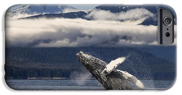 Snowy Day iPhone Cases - A Humpback Whale Breaches As It Leaps iPhone Case by John Hyde