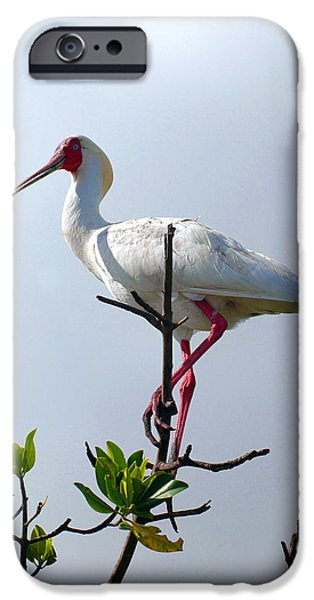 Mangrove Forest iPhone Cases - African Spoonbill in Casamance Senegal iPhone Case by Eduardo Huelin