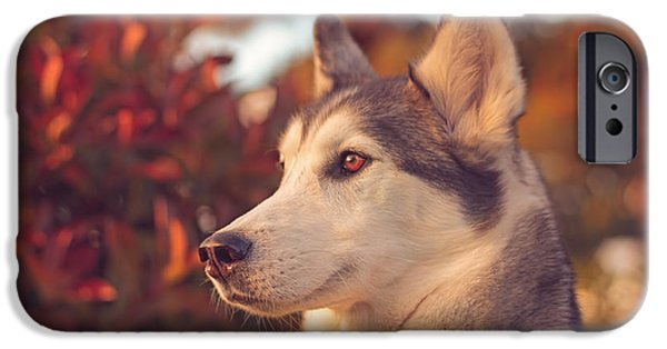 Husky iPhone Cases - Aurora  iPhone Case by Brian Cross