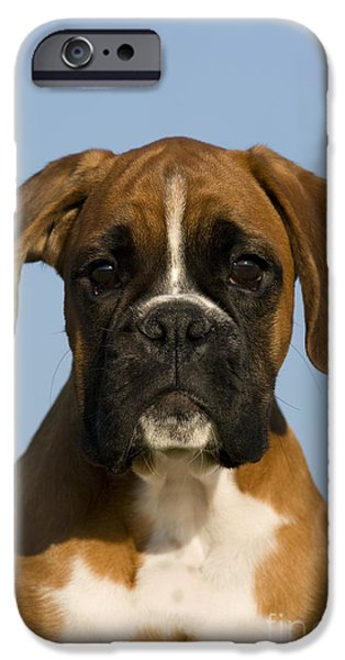 Cute Puppy iPhone Cases - Boxer Puppy iPhone Case by Jean-Louis Klein & Marie-Luce Hubert
