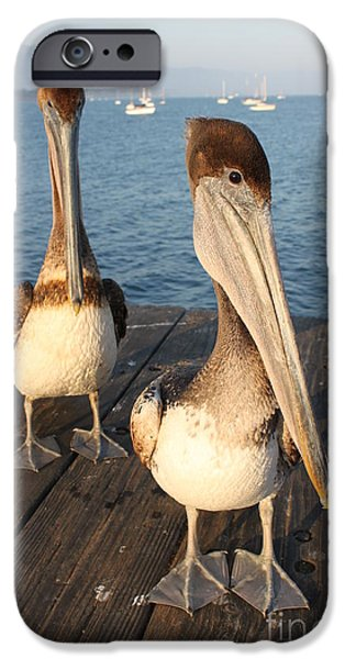 Sea Birds iPhone Cases - California Pelicans iPhone Case by Henrik Lehnerer