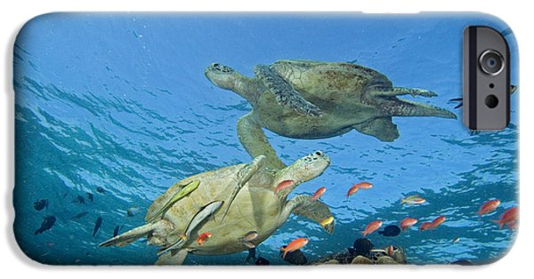 Animal Wisdom iPhone Cases - Green Sea Turtle iPhone Case by Dave Fleetham - Printscapes