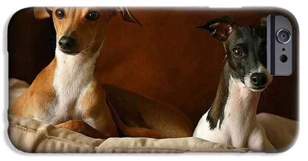 Rescued Greyhound iPhone Cases - Italian Greyhounds iPhone Case by Angela Rath