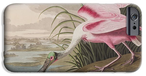River View Drawings iPhone Cases - Roseate Spoonbill iPhone Case by John James Audubon