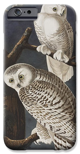 Snowy Evening iPhone Cases - Snowy Owl iPhone Case by John James Audubon