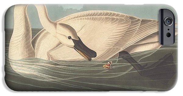 Swans... iPhone Cases - Trumpeter Swan iPhone Case by John James Audubon