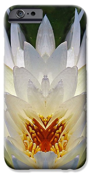 Nature Center Pond iPhone Cases - White Lotus  iPhone Case by Daniel Unfried