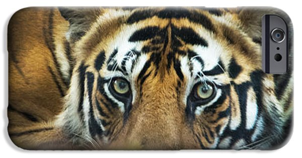 The Tiger iPhone Cases - Bengal Tiger Panthera Tigris Tigris iPhone Case by Panoramic Images