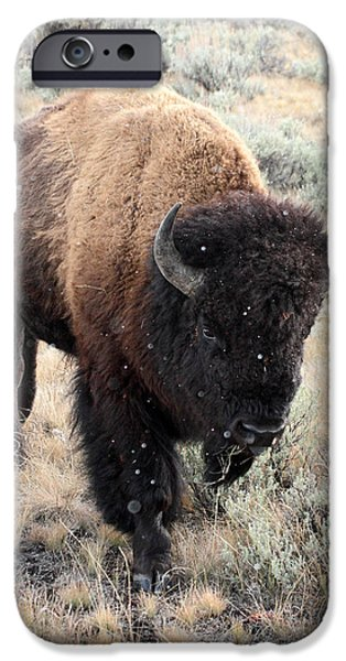 Bison Photographs iPhone Cases - Bison in Yellowstone National Park iPhone Case by Pierre Leclerc Photography