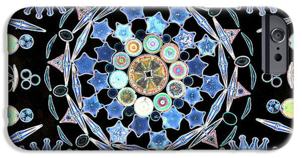 Diatoms Photographs iPhone Cases - Diatoms iPhone Case by M I Walker