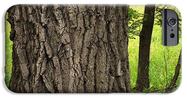 Forest Detail iPhone Cases - Cottonwood Tree Trunk iPhone Case by Donald  Erickson