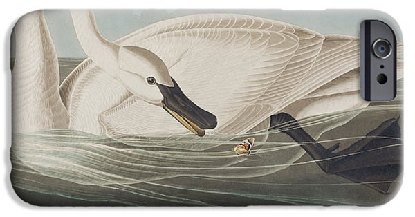 Swans... iPhone Cases - Trumpeter Swan  iPhone Case by John James Audubon