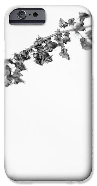 Untitled iPhone Case by Gabriela Insuratelu