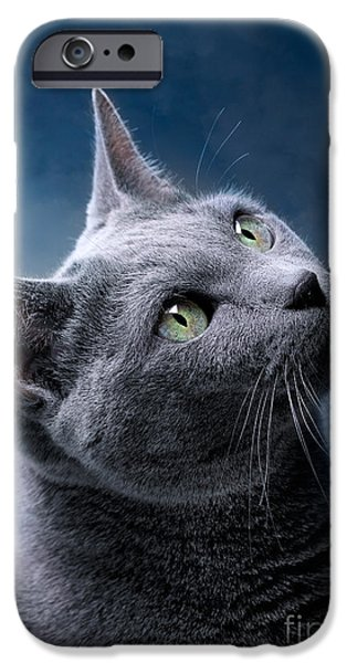Gray Hair iPhone Cases - Russian Blue Cat iPhone Case by Nailia Schwarz