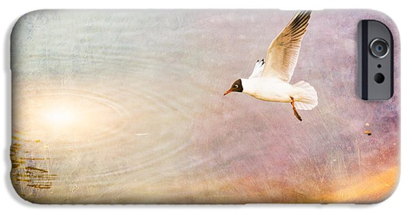 Sea Birds iPhone Cases - Seagull over the Water iPhone Case by Alain De Maximy
