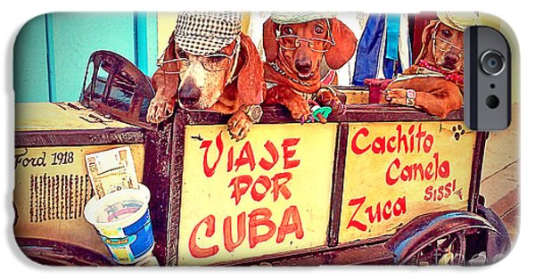 Dogs iPhone Cases - Havana, Cuba iPhone Case by Chris Andruskiewicz