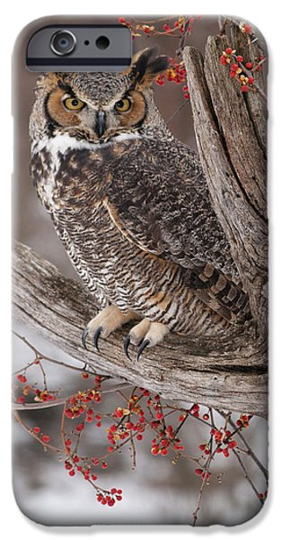 Great Horned Owl iPhone Case by Cindy Lindow