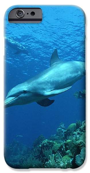 Bottlenose Dolphin Tursiops Truncatus iPhone Case by Konrad Wothe